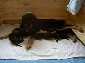 Stolze Mama (1)