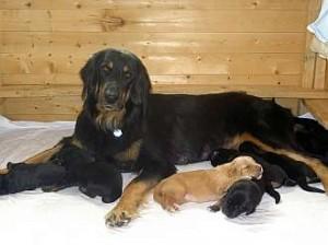 Stolze Mama (2)