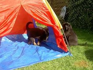Die Camper!