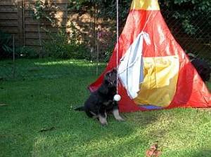 Erst wäge ich das Zelt in Sicherheit, ...
