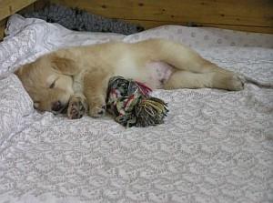 Schon lange nicht mehr geschlafen!