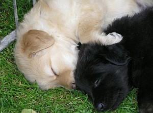 Blond und Schwarz