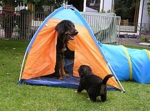 ... geh' raus! Du bist zu gross für das Zelt.
