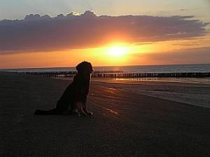 Hannah am Strand beim Sonnenuntergang.