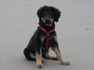 Lena am Strand