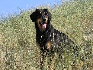 Lena in den Dünen